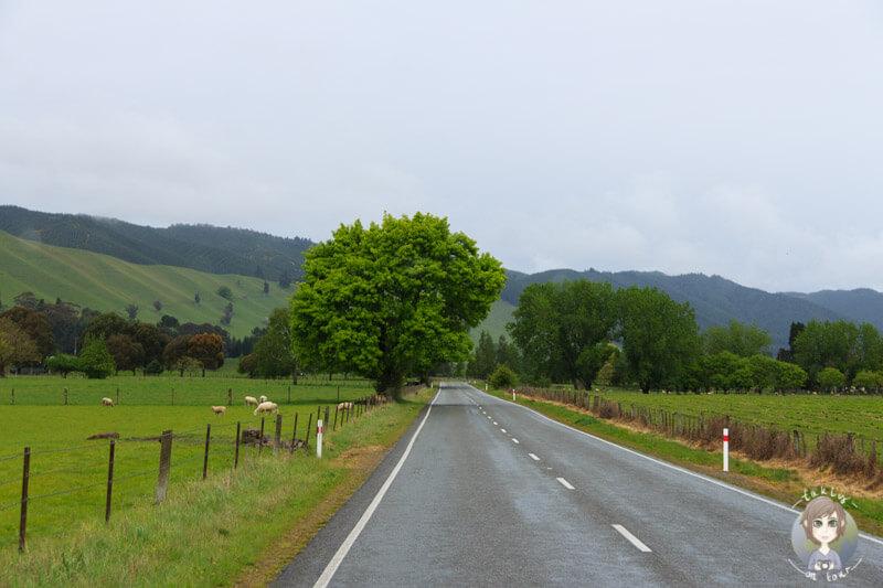 Fahrt durch das Motueka Valley