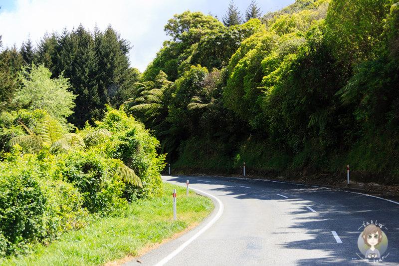 Fahrt über der Takaka Hill Highway, Abel Tasman National Park