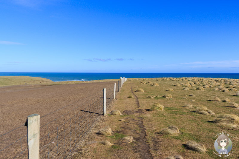 Slope Point, Neuseeland (1)