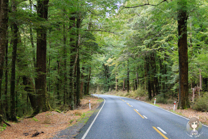 Fahrt durch den Fiordland National Park