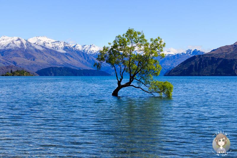 The lonely Tree, Lake Wanaka