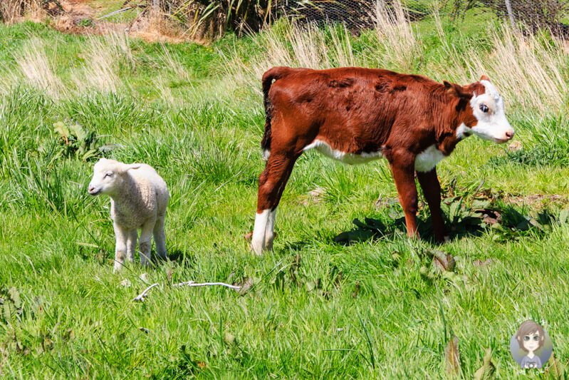 Tiere in  Owaka