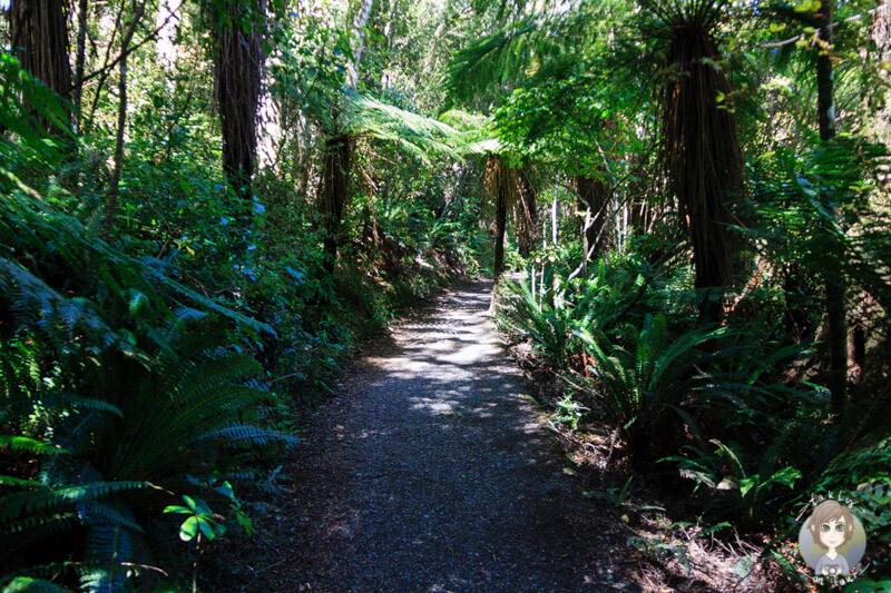Wanderweg zu den Purakaunui Falls, Catlins (2)
