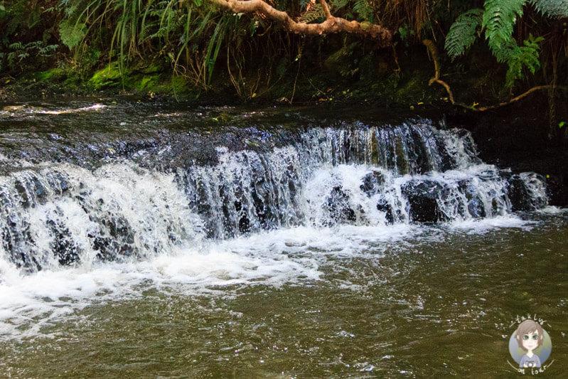 Wanderweg zu den Purakaunui Falls, Catlins (3)