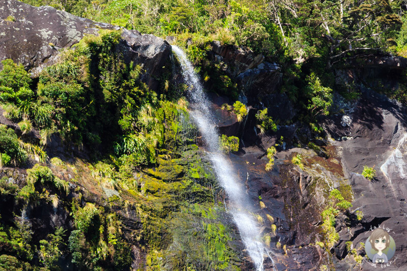 Wasserfall am Milford Sound (1)