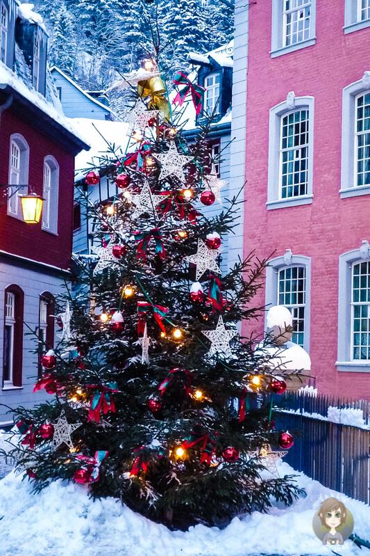 Weihnachtsbaum-Monschau-Eifel