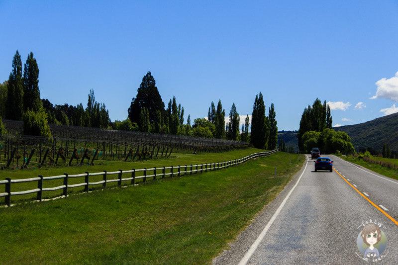 Weinanbau in der Otago Region