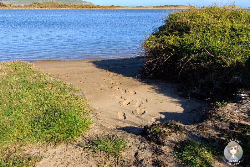 Weir Beach, Haldane, Neuseeland (5)