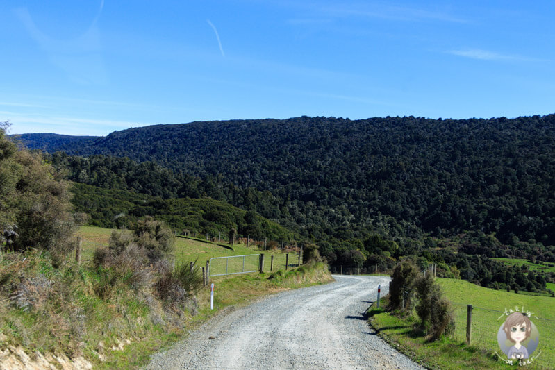 Zufahrt zu den Mc Lean Falls, Neuseeland