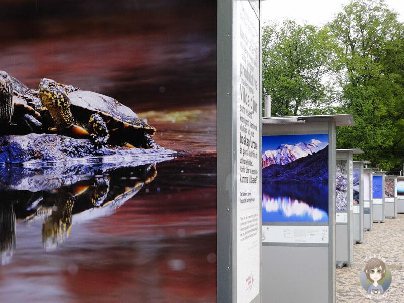 Eine Ausstellung mit internationalen Fotografien in Stockholm