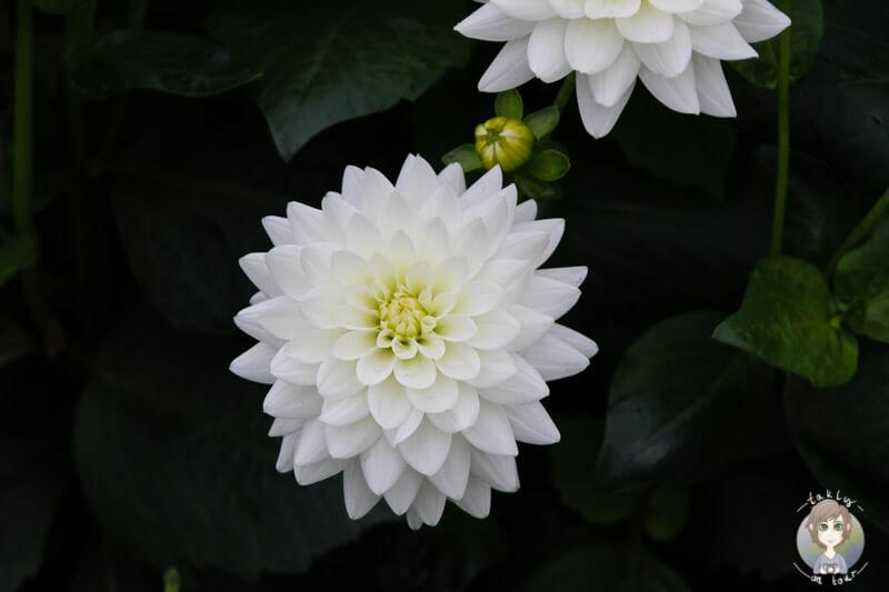 Blume in Helsinki