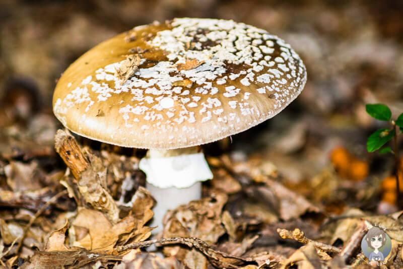 Ein Pilz auf Augenhöhe fotografiert