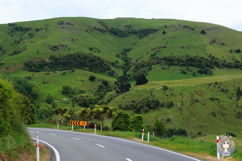 Fahrt über die Banks Peninsula Richtung Christchurch (1)