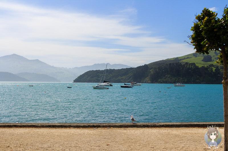 Ein toller Blick auf die Bucht vor Akaroa