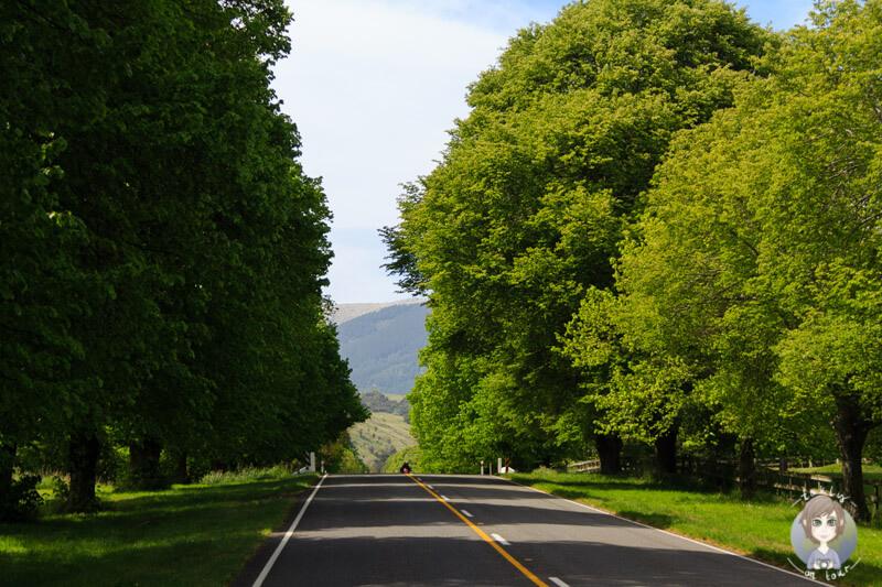 Fahrt über die Hauptstraße von Cooptown
