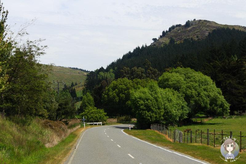 Fahrt entlang der Banks Peninsula, Christchurch (3)