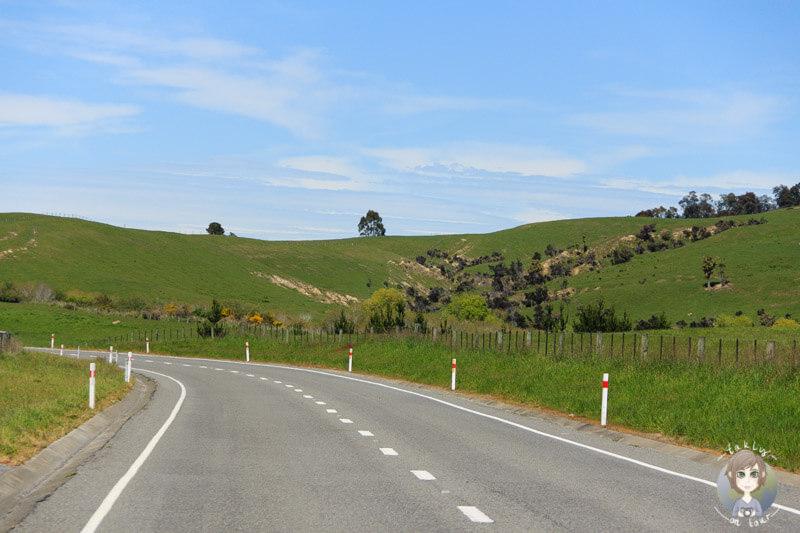 Fahrt nach Christchurch über den SH1 (1)