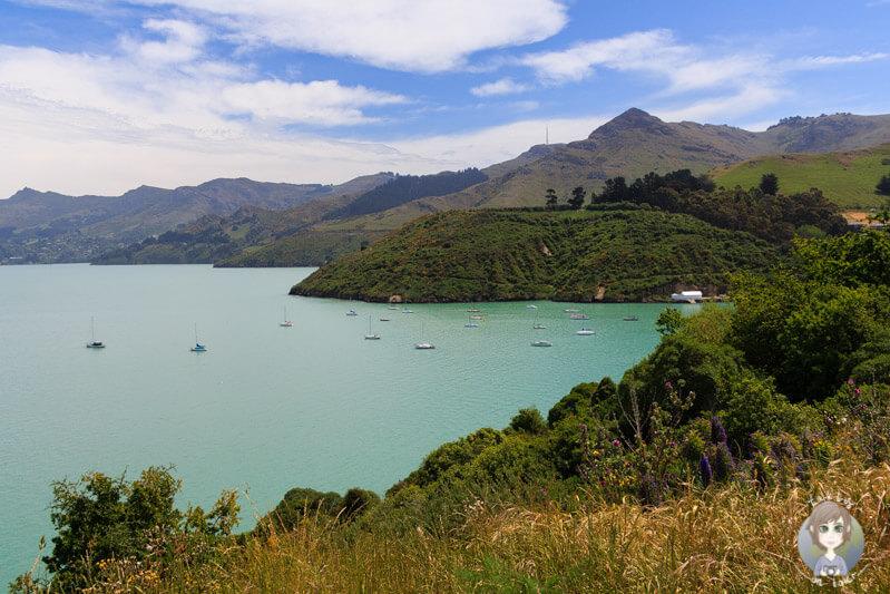 Ein toller Blick über die Bucht, Fahrt auf die Banks Peninsula
