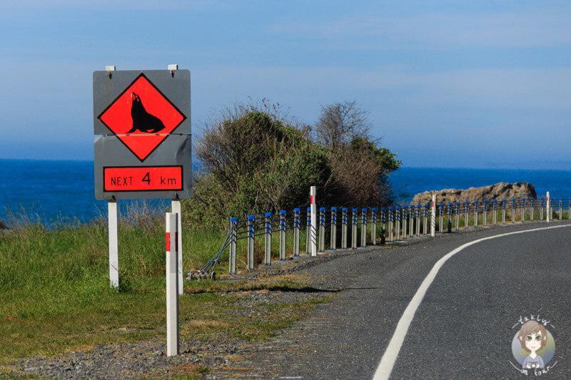 Vorsicht Seelöwen - ein Straßenschild an der Ostküste von Neuseeland
