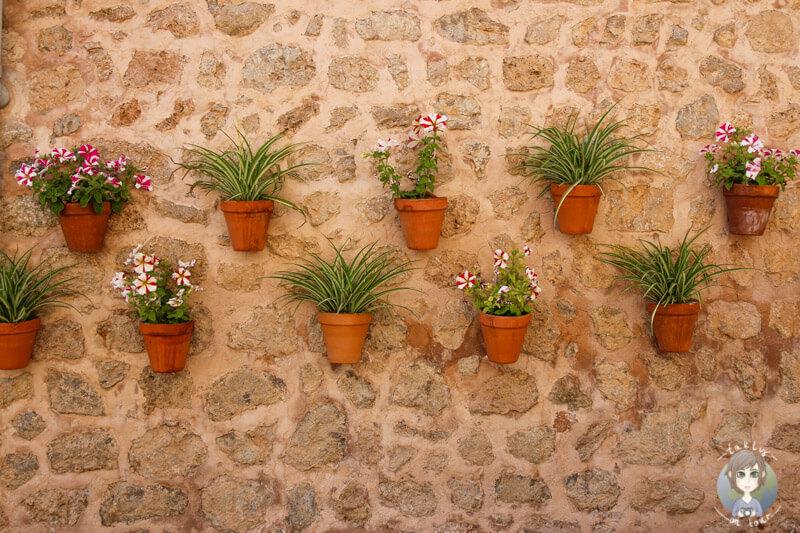 Blumen hängen an einer Hauswand in Valldemossa, Mallorca