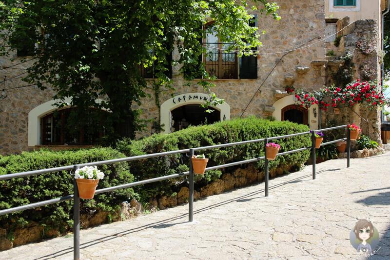 Natur pur, Grün und überall Blumen in Valldemossa