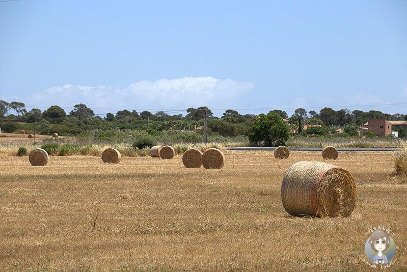 Heuballen auf Mallorca, Landschaft in Ses Salines
