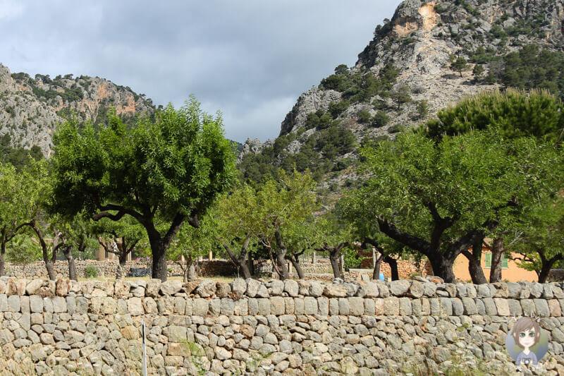 Eine tolle Landschaft auf Mallorca
