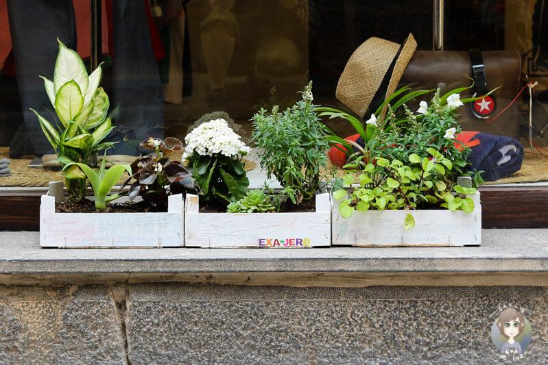 Kreativer Blumenkasten auf Mallorca