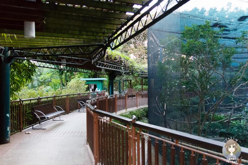 Lautes Vogelgezwitscher hört man neben dem Vogelkäfig im Kowloonpark