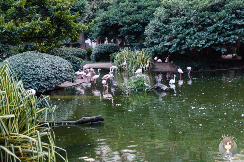 Flamingos in Hong Kong im Kowloon Park