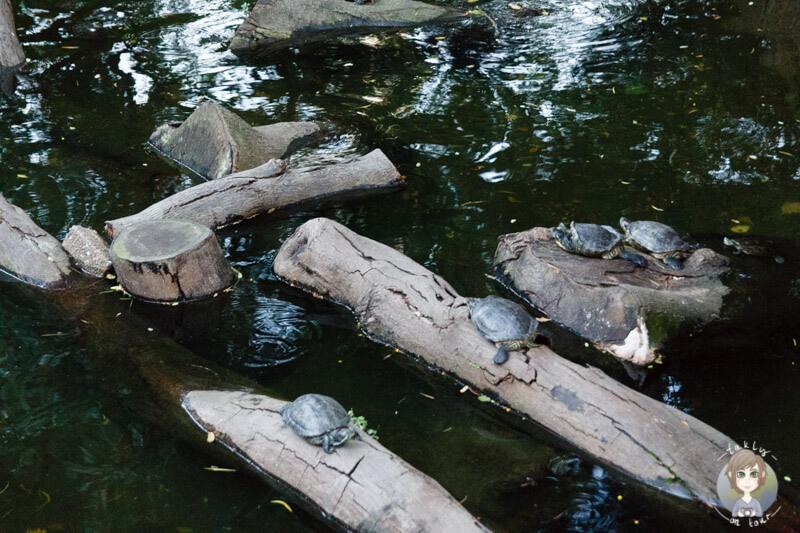 Wasserschildkröten in Hong Kong