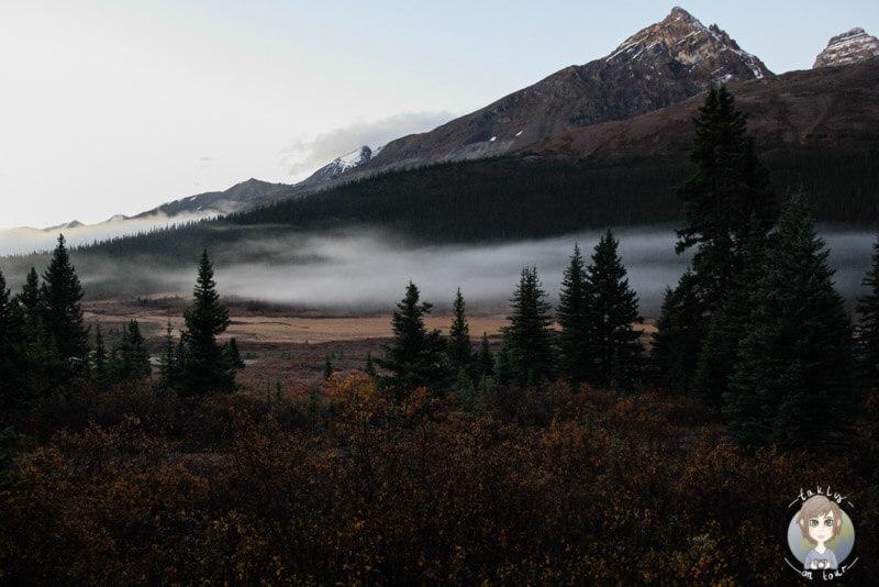 Aussicht vom Wilcox Campground, Icefields Parkway, Kanada