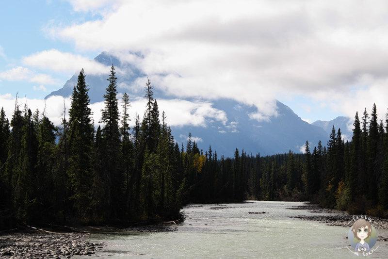 Der Athabasca River fließt entlang des Icefields Parkway, Kanada