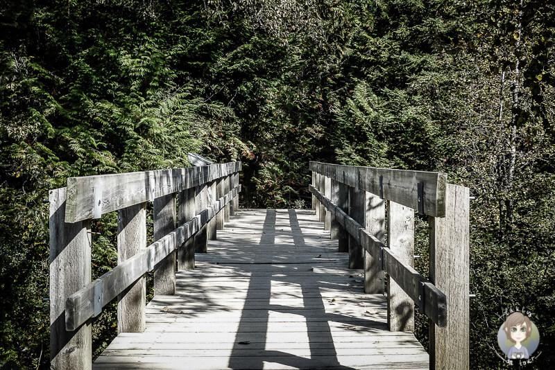 Der Beginn des Skunk Cabbage Trails, Mount Revelstoke National Park, Kanada