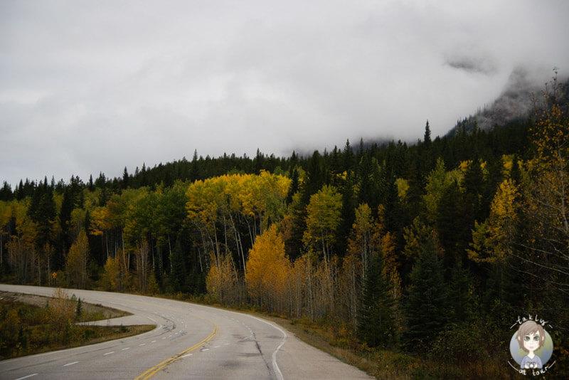 Der Icefields Parkway im Herbst in Kanada