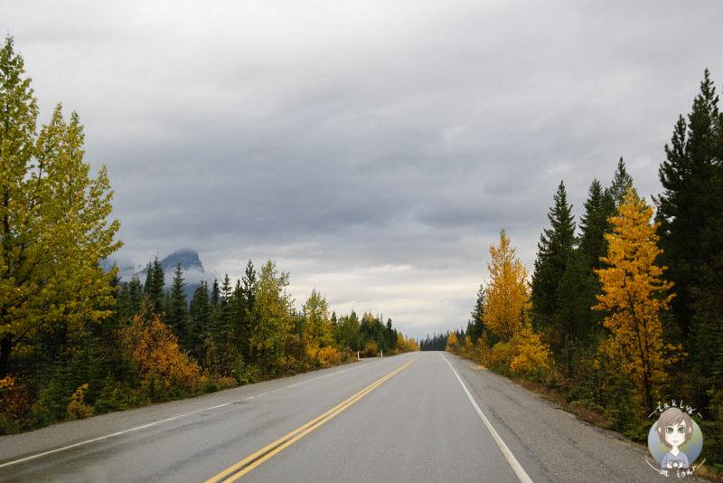 Der Icefields Parkway im Herbst