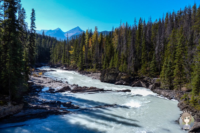 Der Kicking Horse River, Kanada