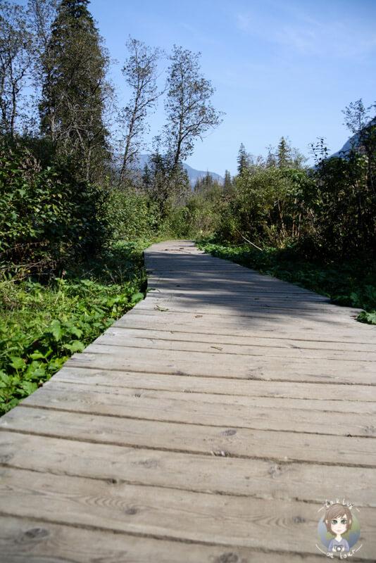 Der Skunk Cabbage Trail, Kanada