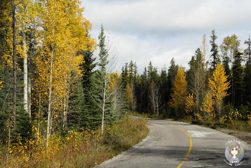 Das alte Teilstück des Icefields Parkway, der Highway93a