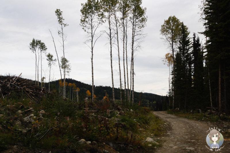 Ein Waldweg in Kanada
