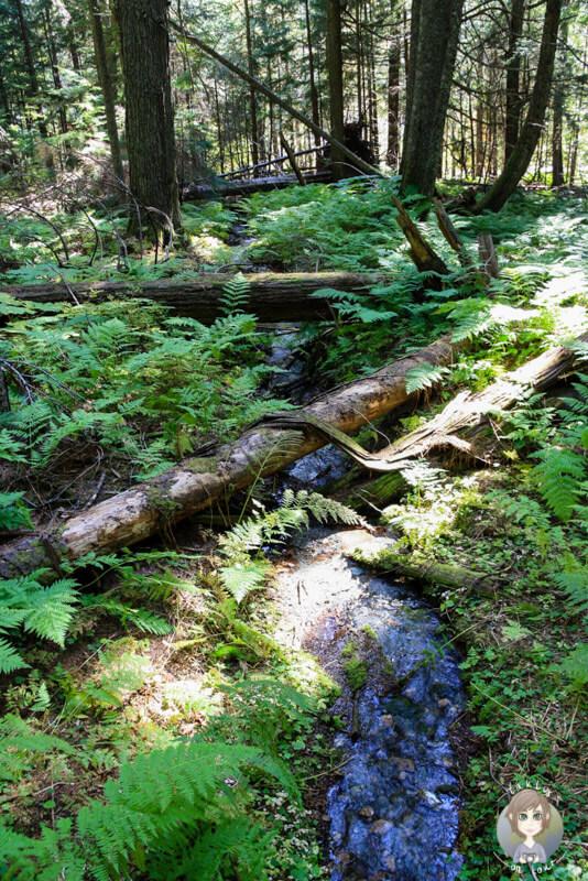 Ein kleiner Bach auf dem Hemlock Grove Trail, Mount Revelstoke National Park, Kanada