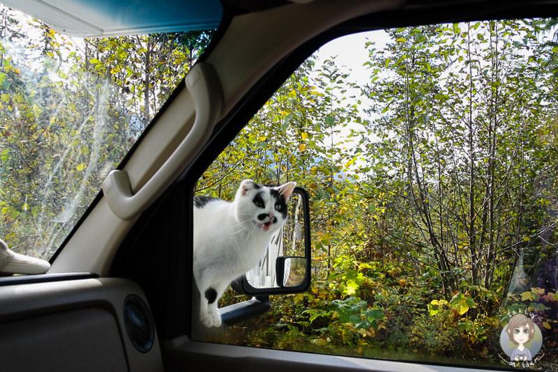 Katze im Welss Gray Provincial Park