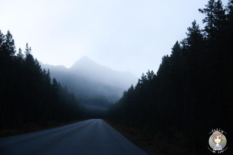 Fahrt über die Nebelverhangene Maligne Lake Road im Jasper National Park, Kanada