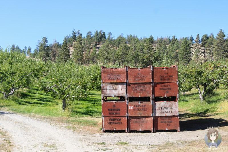 Obstkisten in Summerland, BC, Kanada