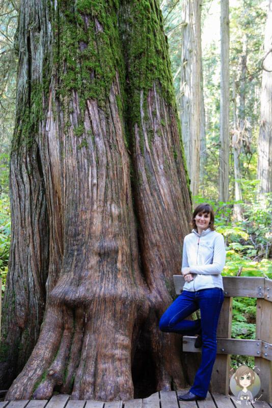 Riesgie Bäume in Kanada