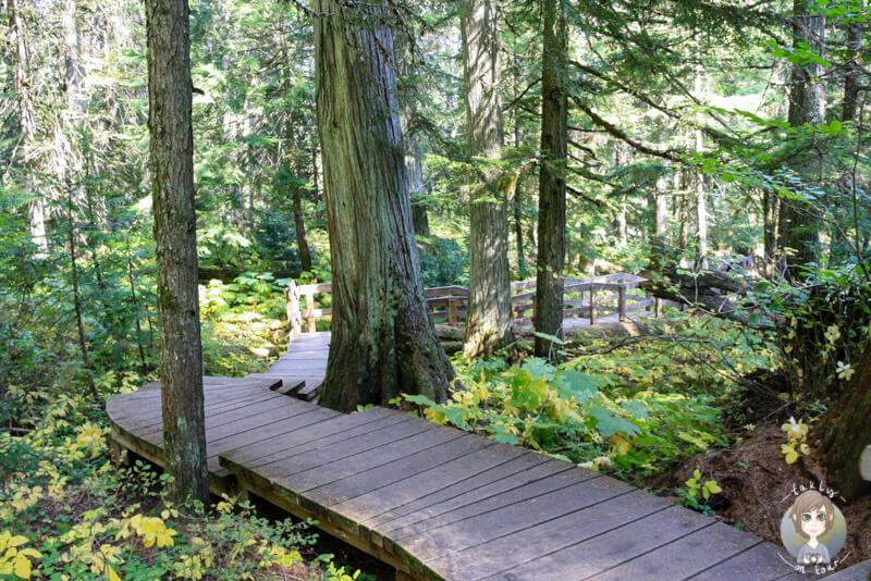 Ein schöner Boardwalk auf dem Giant Cedars Trail, Mount Revelstoke National Park, Kanada