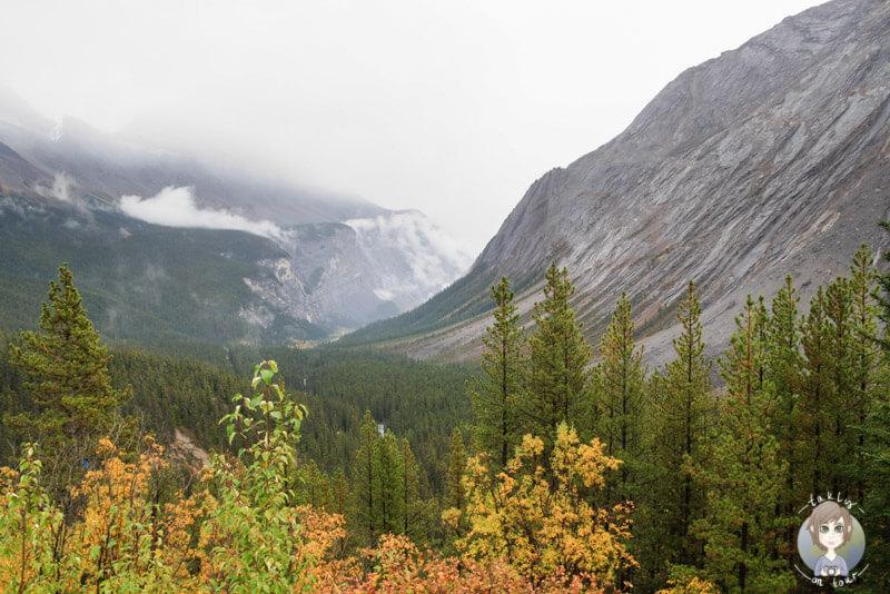 Ein toller Viewpoint mit Sicht über den Icefields Parkway, Kanada