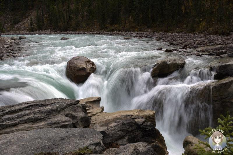 Die Sunwapta Falls, ein schöner Stopp auf dem Icefields Parkway