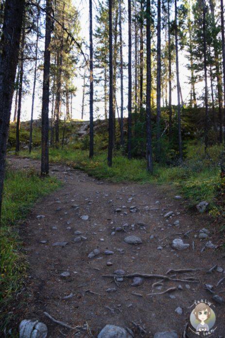 Wanderweg im Valley of the five Lakes, Jasper