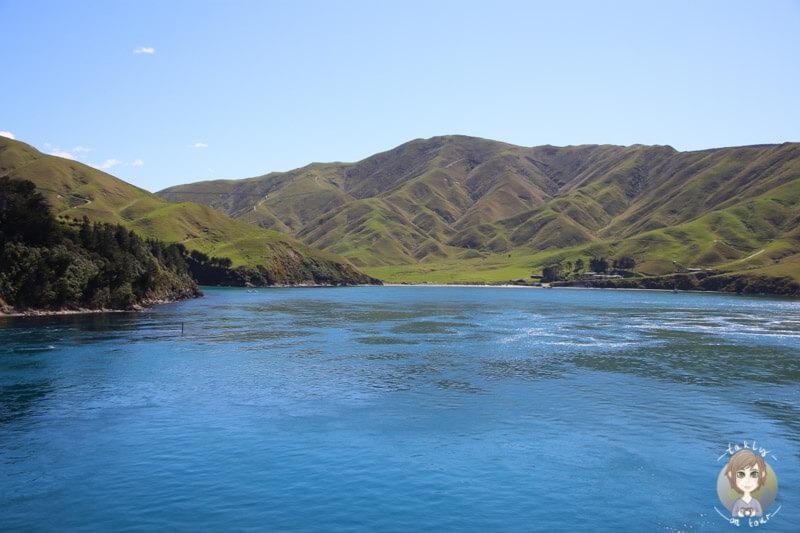 Blick auf Arapawa Island, auf der Fahrt mit der Faehre Interislander in Neuseeland
